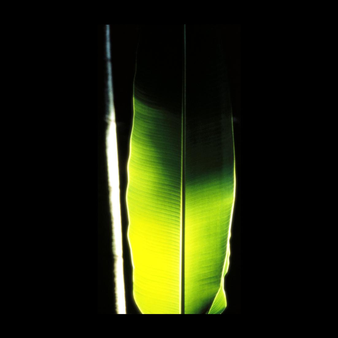 slider tableaux+photos 3 Fragment Sauvage